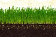 Přírodní tráva